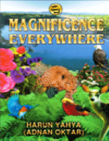 MAGNIFICENCE EVERYWHERE