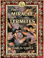 THE MIRACLE OF TERMITES